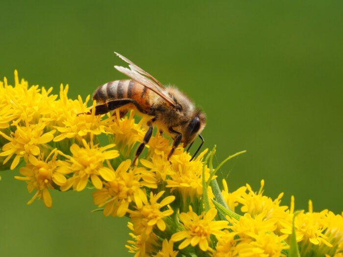 flickr CC BY 2.0 - Michael Mueller - rettet die Bienen